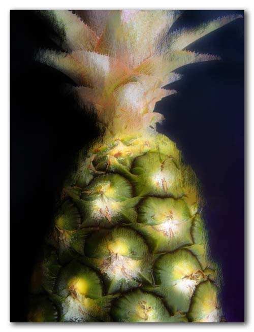 Black pineapple - 2009