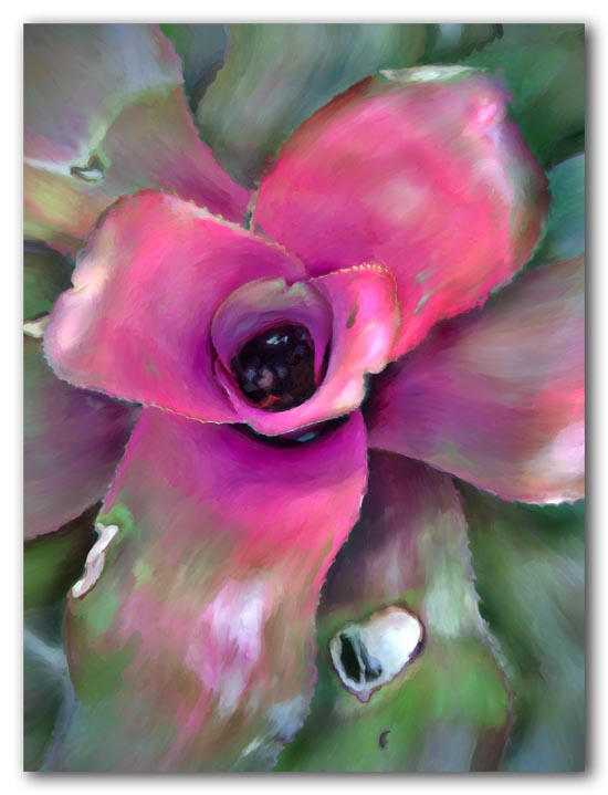 Bromeliad Beauty -- 2009