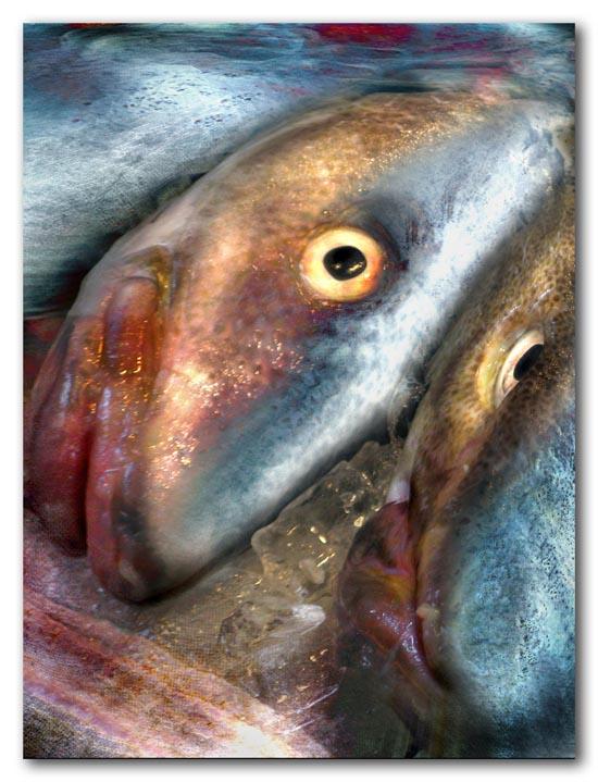 Fish for Dinner? -- 2009