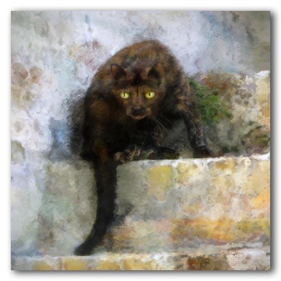 Feral Feline -- 2009