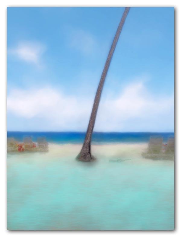 Palm and sunbathers at Carambola