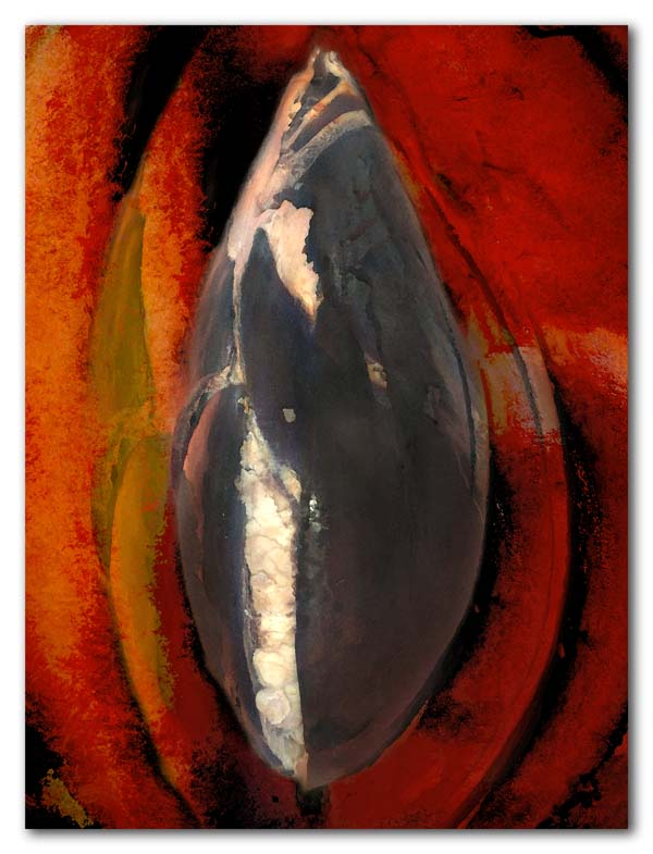 Mamey Sapote Seed