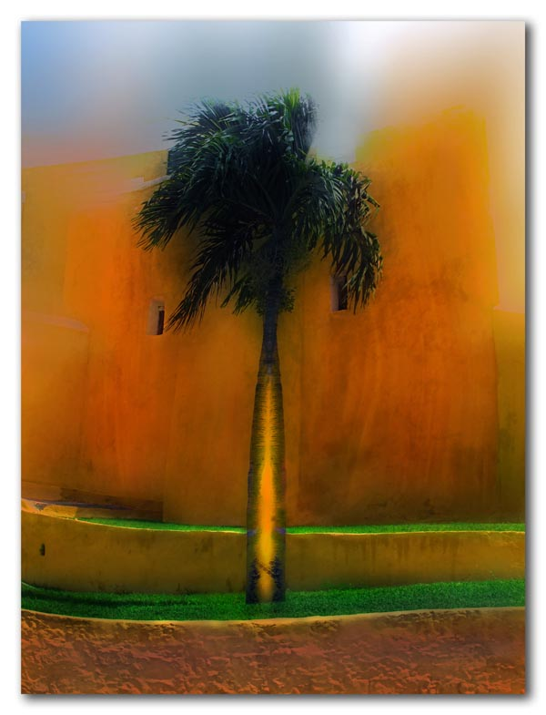 an orange palm
