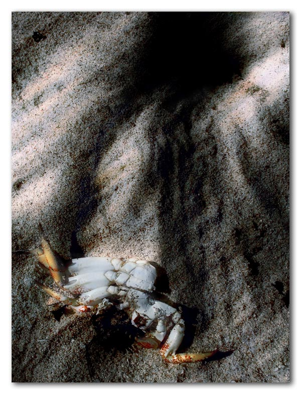 ghost crab hole