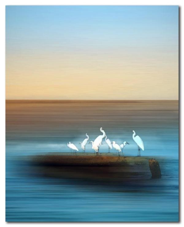White Birds at Siesta Key