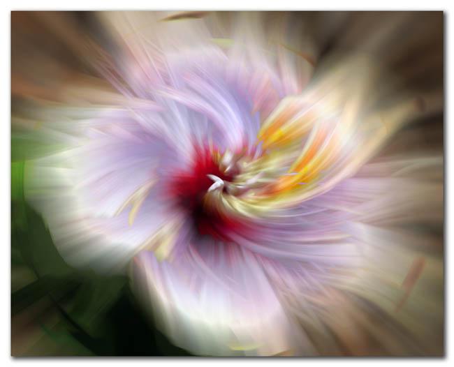 Hibiscus Flare