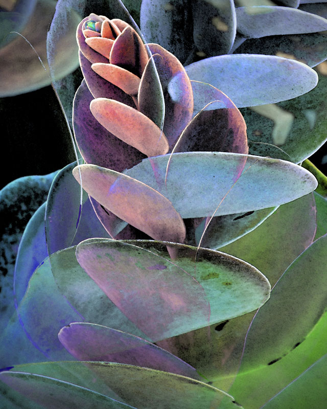 florida succulents