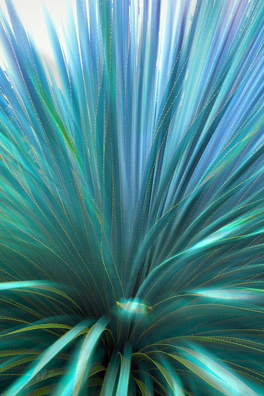 Palm Burst